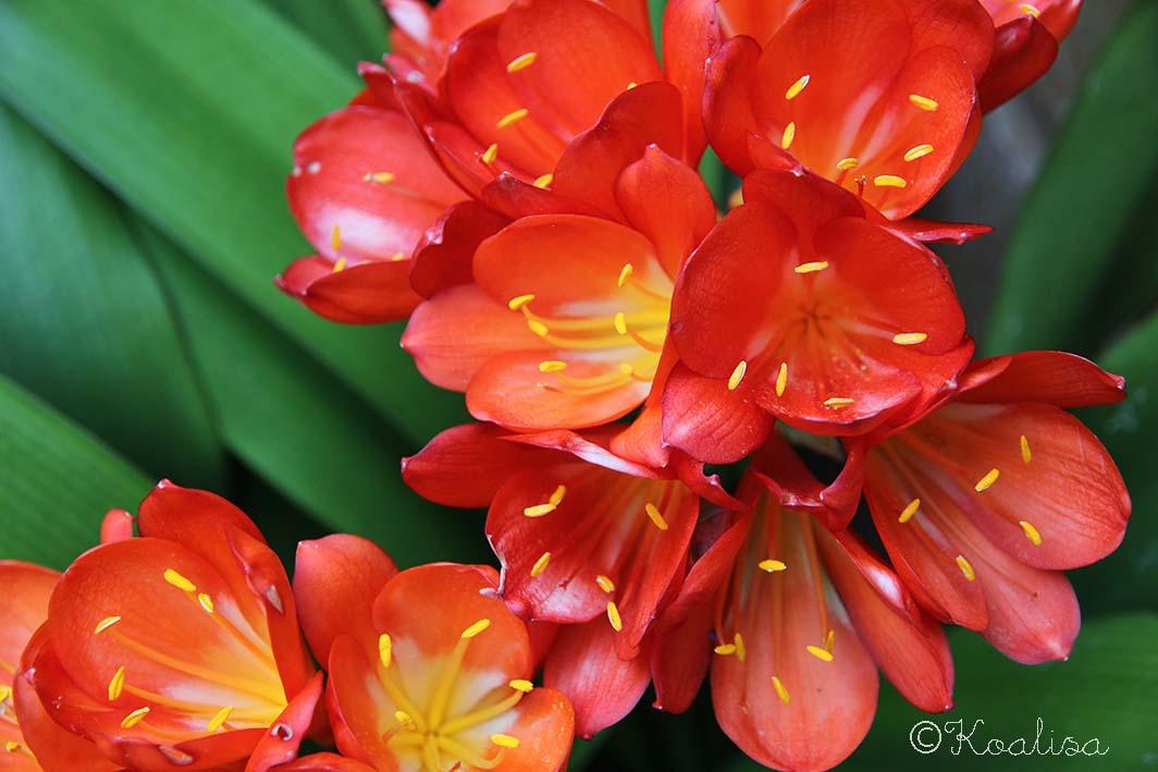Flower Power 2015 #5