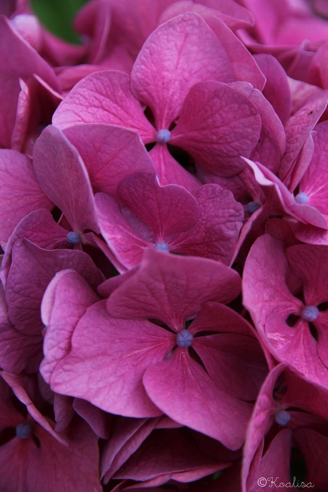 Flower Power 2015 #12