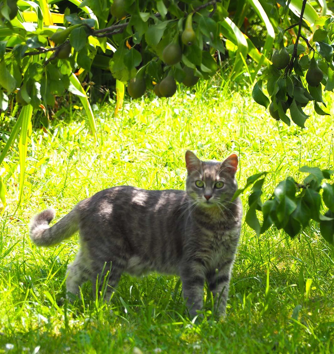 Des chats et des hortensias